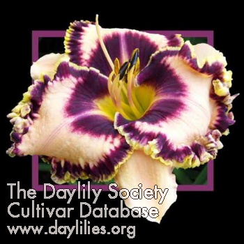 Daylily Photo - A Few Good Men