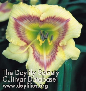 Daylily Photo - Aztec Headdress