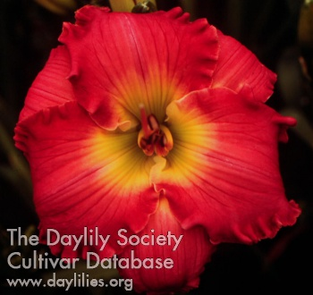Daylily Photo - Big Sur