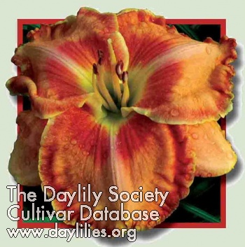 Daylily Photo - Bring It On