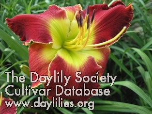 Daylily Photo - Colonel Jim Scheurich