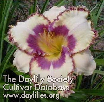 Daylily Photo - Coach's Pale Rider