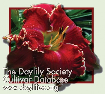 Daylily Photo - Electric Red