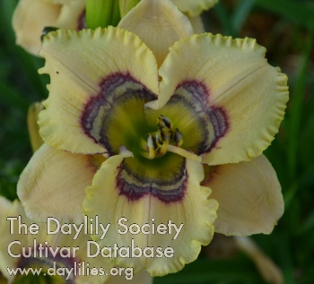 Daylily Photo - Fairy Tale Friends