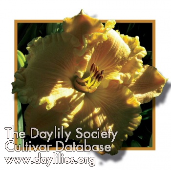 Daylily Photo - Fly Me to the Moon