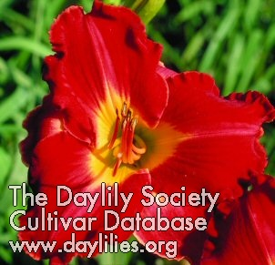 Daylily Photo - Granny Coot