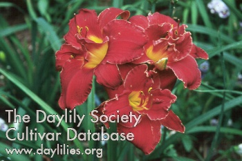 Daylily Photo - Highland Lord