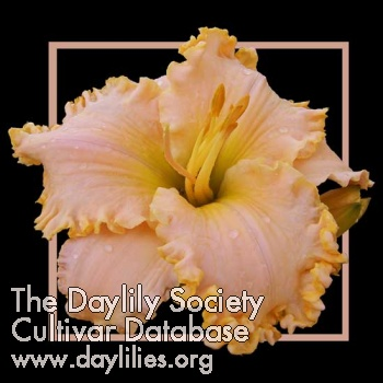 Daylily Photo - Homemade Peach Ice Cream