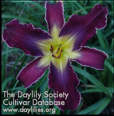 Daylily Photo - Increased Complexity