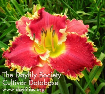 Daylily Photo - Iwanna Piranha