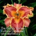 Daylily Interview with a Vampire
