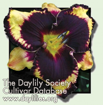 Daylily Photo - Just Fabulous