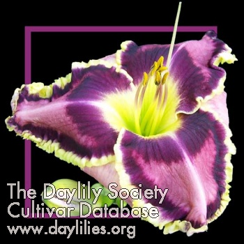 Daylily Photo - Living Legend