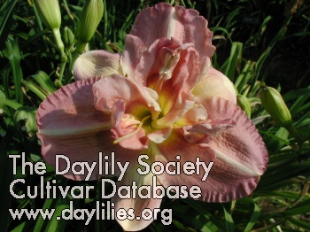 Daylily Loosely Done