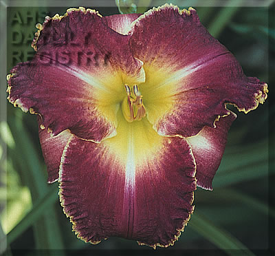 Daylily Photo - Louis The Sixteenth