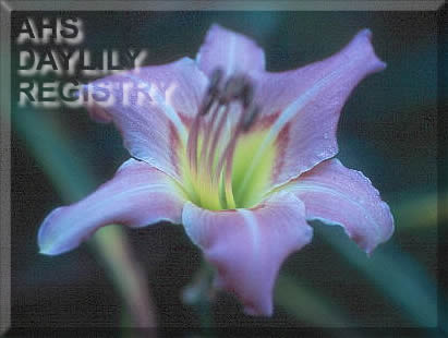 Daylily Photo - Lynnstar
