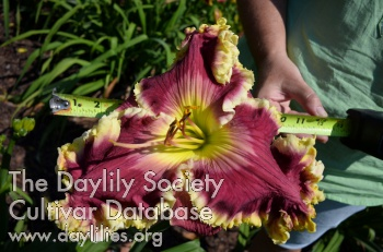 Daylily Photo - Master and Bold Ruler