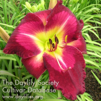 Daylily Paradise Bar and Grill