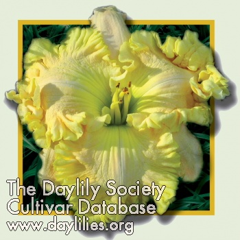 Daylily Photo - Queen Of The Garden