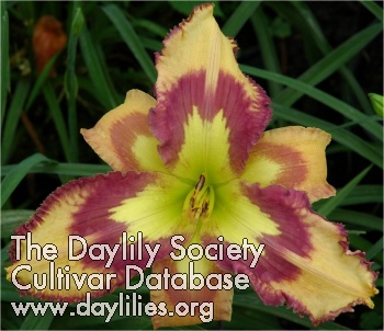 Daylily Photo - Retro Afternoon
