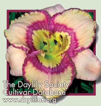 Daylily Photo - Sitting Queen