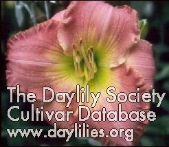 Daylily Photo - Song In My Heart