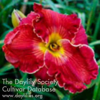 Daylily Photo - Spacecoast Red Mammoth