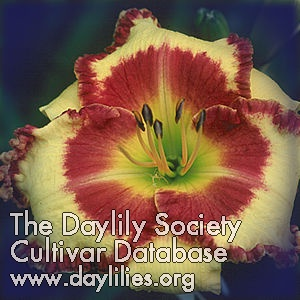 Daylily Photo - Steve Trimmer