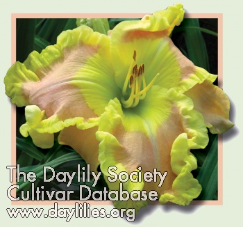 Daylily Photo - Ted's Tribute To Linda