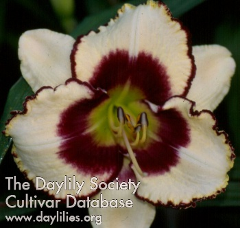 Daylily Photo - Tiger Bait