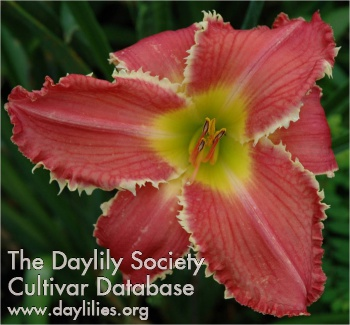 Daylily Photo - Tradition With A Twist