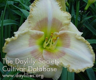 Daylily Photo - Wisest Of Wizards