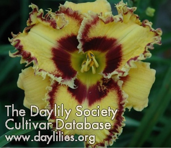 Daylily Photo - Wickedly Wild And Wonderful