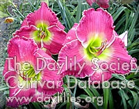 Daylily Photo - Wizard's Secret